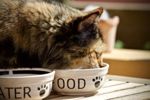 cat-wellness-and-nutrition